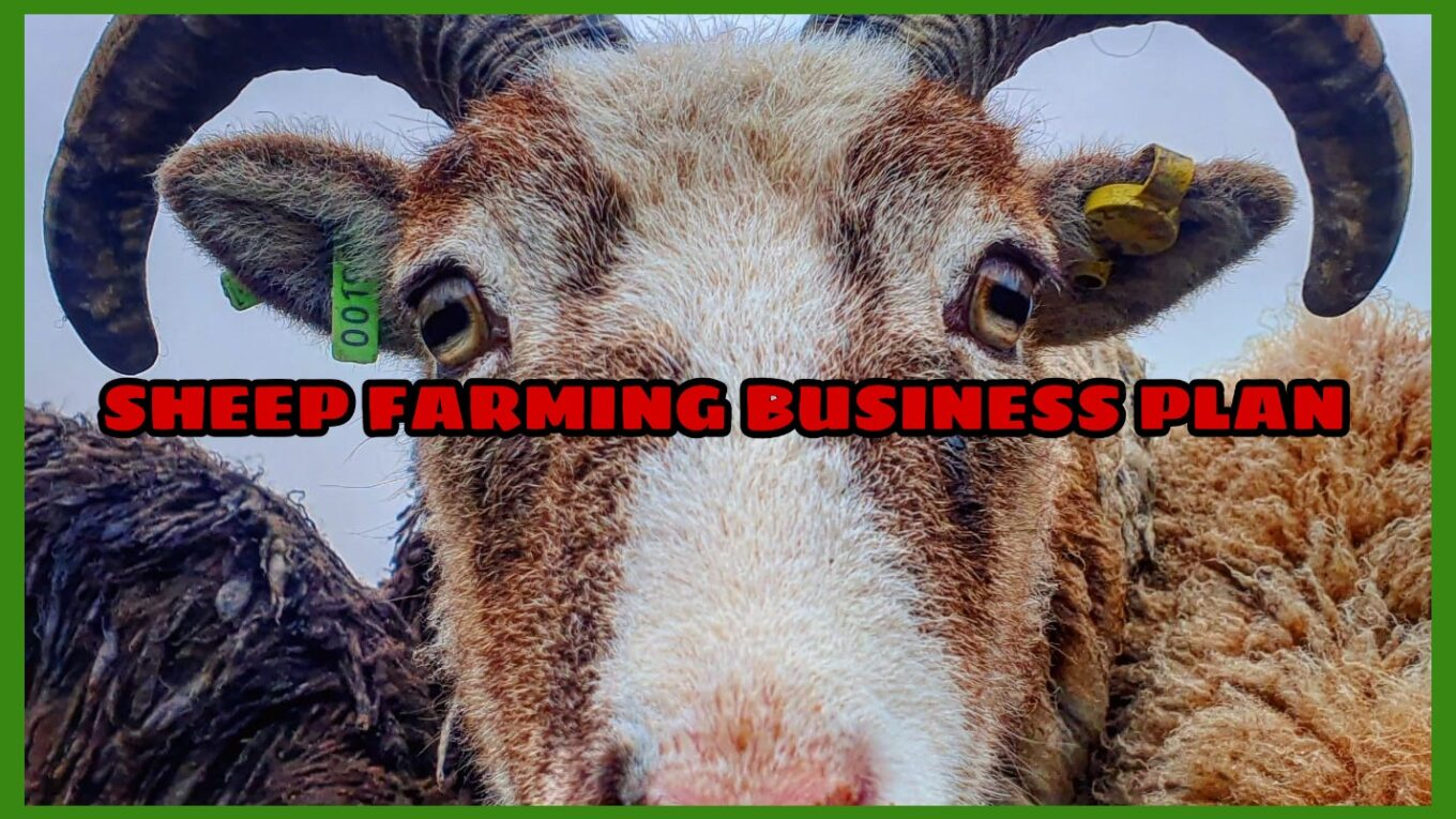 SHEEP FARMING BUSINESS PLAN