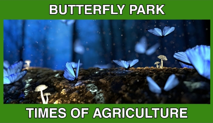 TOA BUTTERFLY PARK