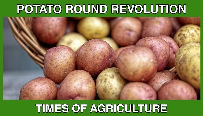TOA POTATO ROUND REVOLUTION