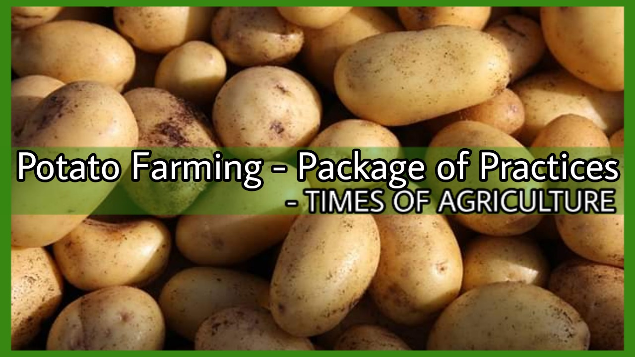 Potato farming package of practices