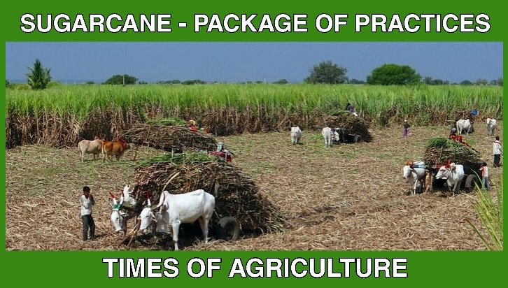 SUGARCANE PACKAGE OF PRACTICES