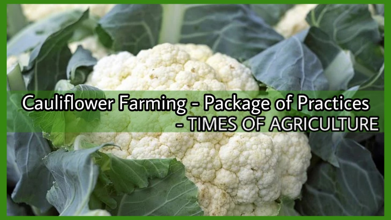 CAULIFLOWER FARMING- PACKAGE OF PRACTICES