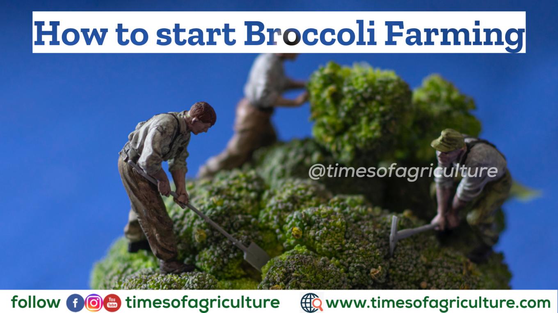 BROCCOLI FARMING TIMESOFAGRICULTURE