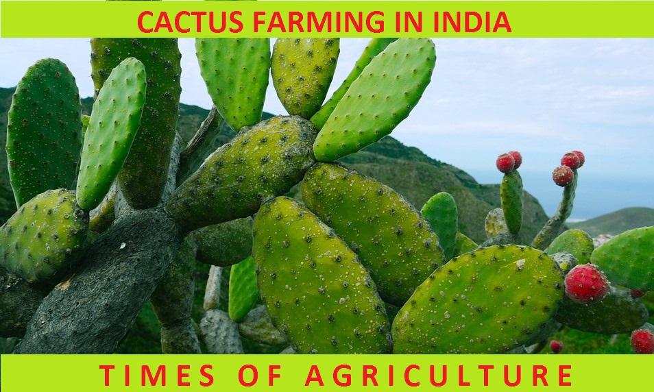 TOA CACTUS FARMING