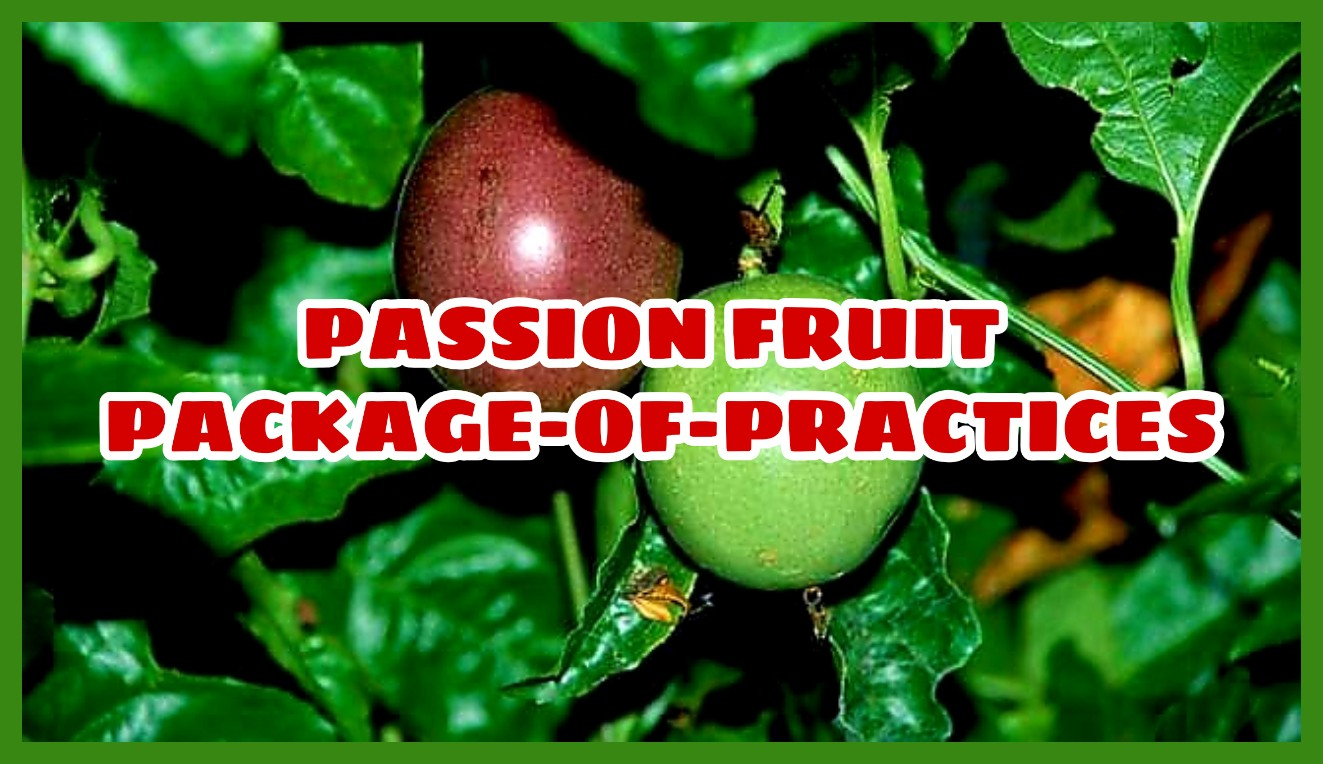 PASSIONFRUIT-FARMING