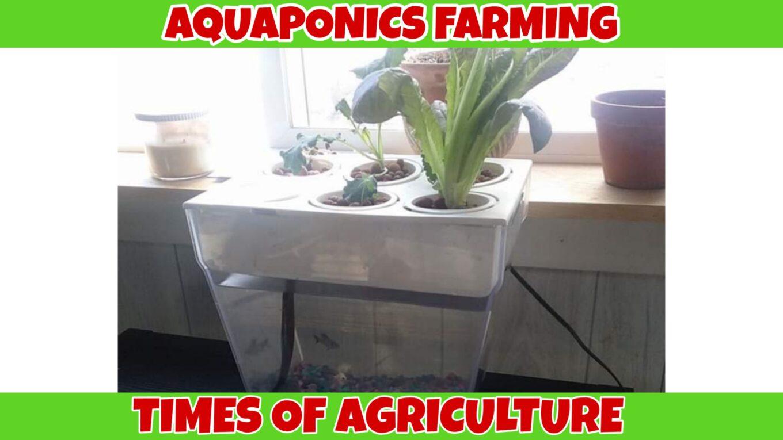 TOA AQUAPONICS FARMING