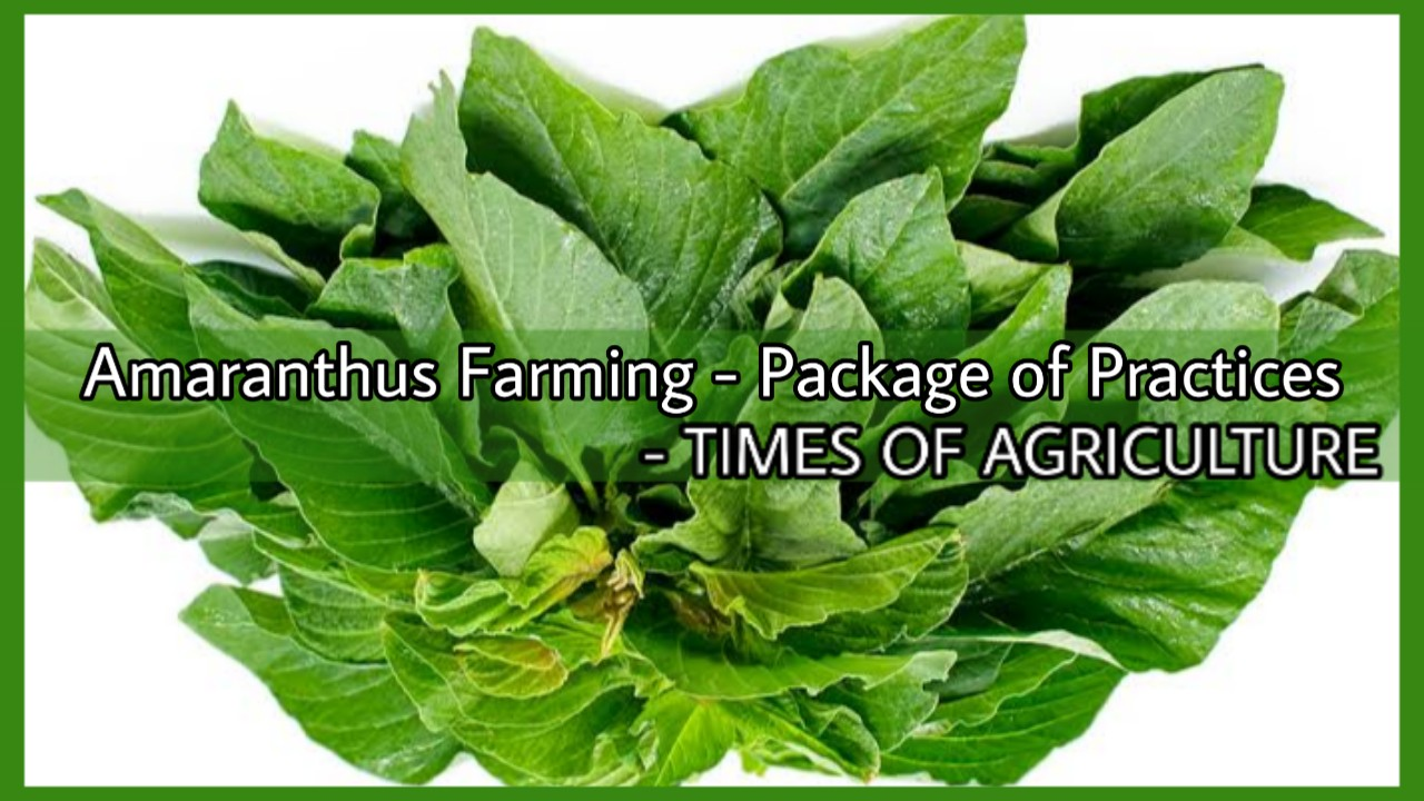 AMARANTHUS FARMING PACKAGE OF PRACTICES