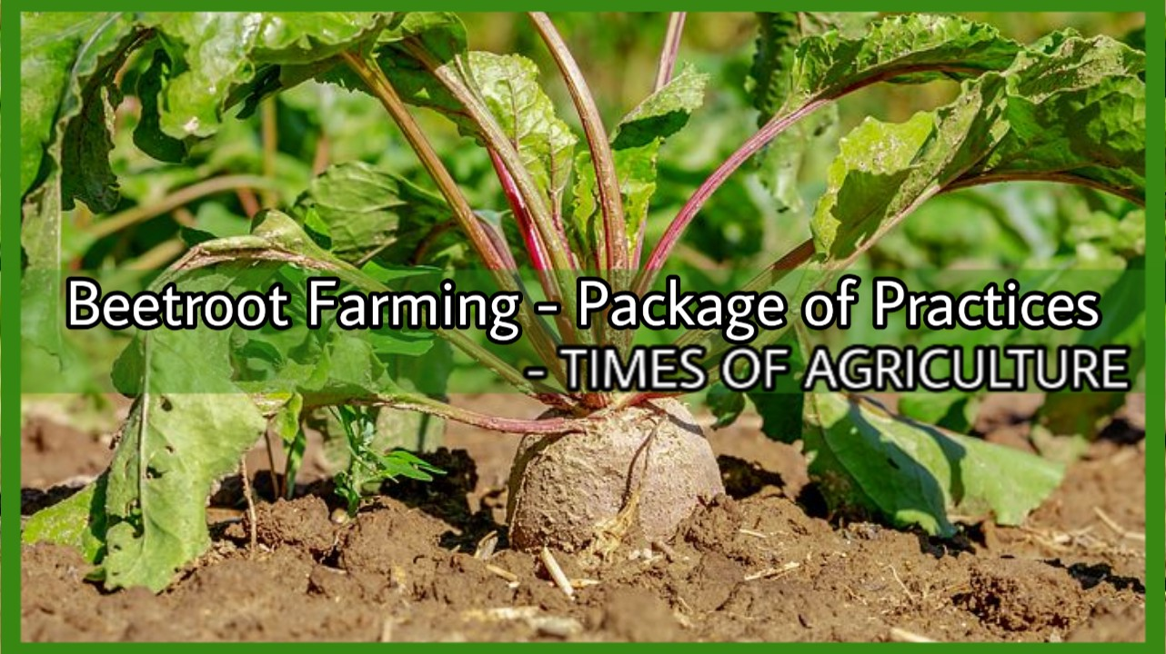 BEETROOT FARMING PACKAGE OF PRACTICES