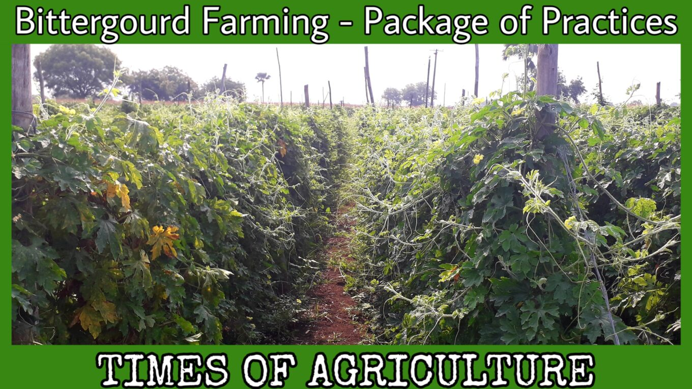 BITTERGOURD FARMING PACKAGE OF PRACTICES