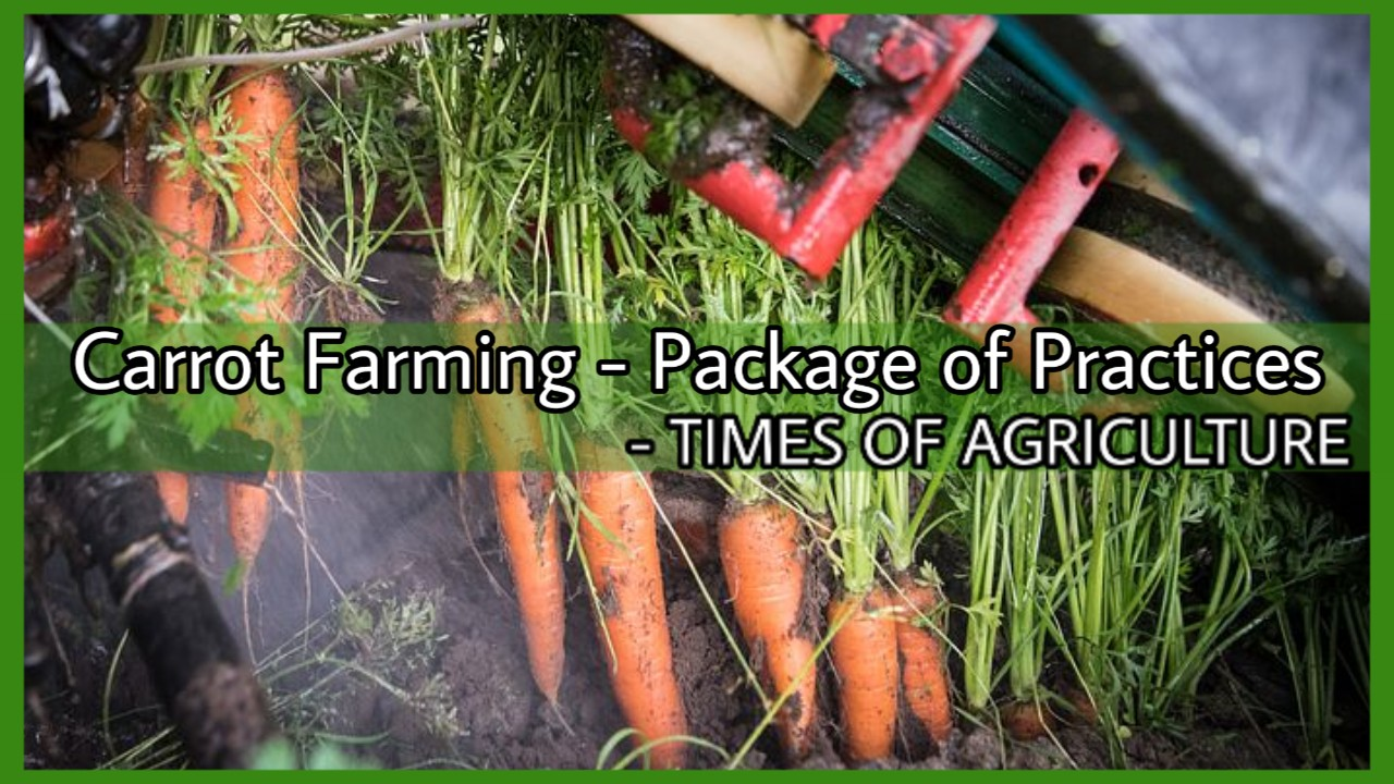 Carrot Farming Package of Practices