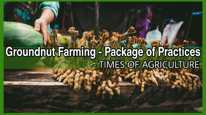Groundnut Farming - Package of practices
