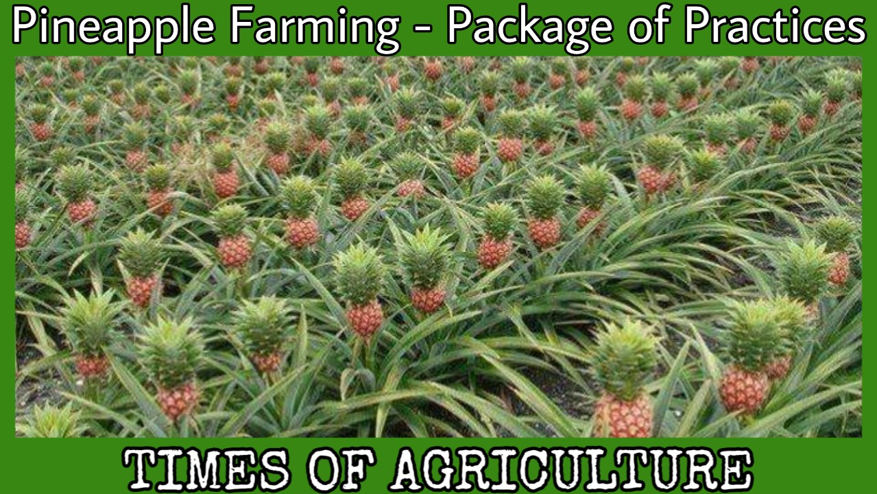 PINEAPPLE FARMING PACKAGE OF PRACTICES