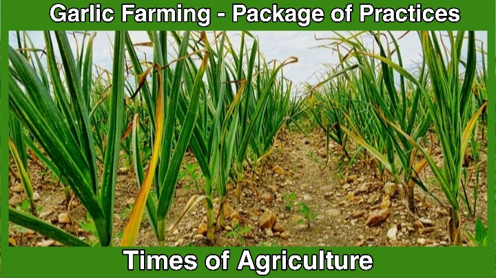 TOA GARLIC FARMING PACKAGE OF PRACTICES