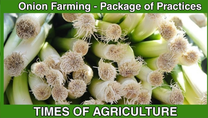 TOA ONION FARMING PACKAGE OF PRACTICES
