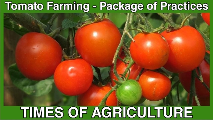 TOA TOMATO FARMING PACKAGE OF PRACTICES