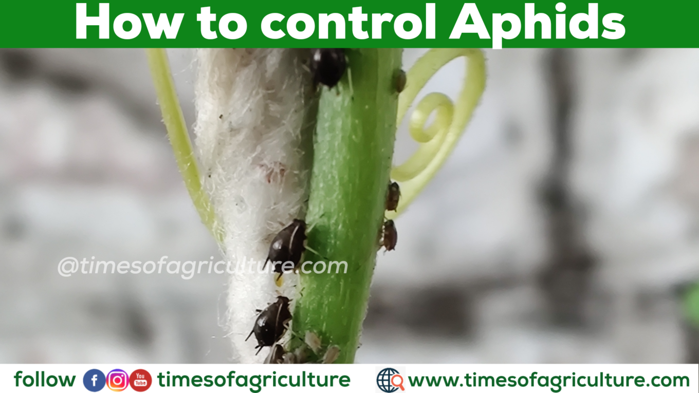 HOW TO CONTROL APHIDS TIMESOFAGRICULTURE
