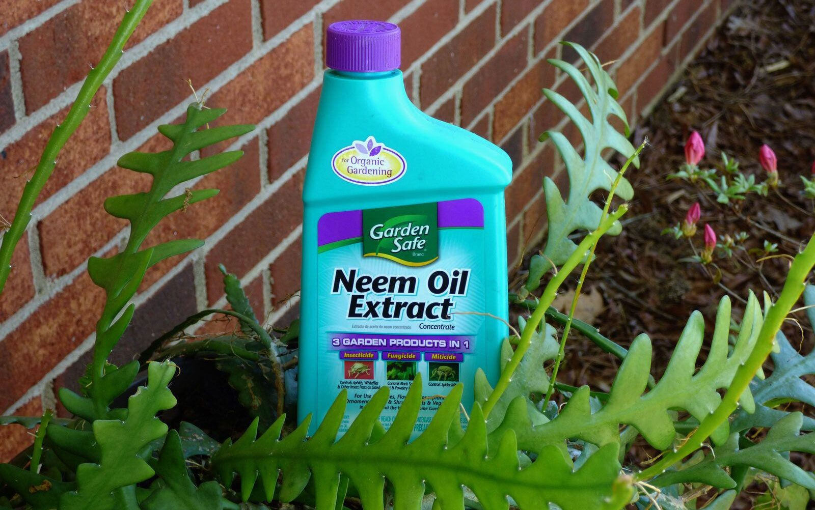 NEEM OIL TIMES OF AGRICULTURE