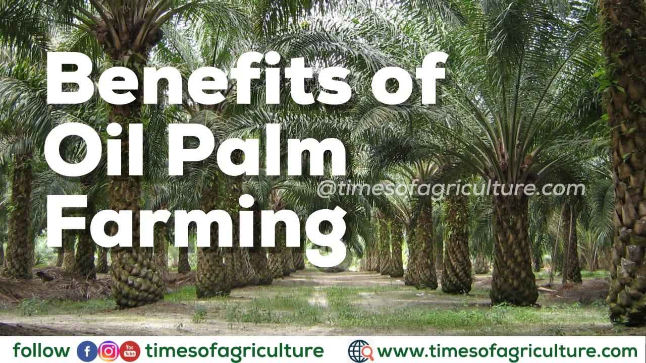 BENEFITS OF OIL PALM PLANTATION FARMING