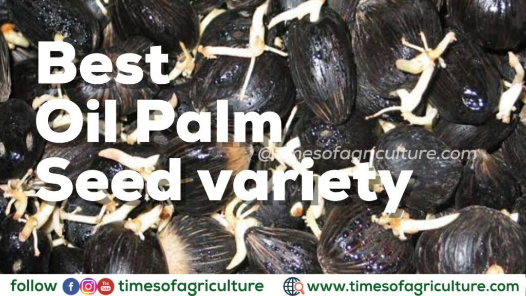 BEST OIL PALM SEED VARIETY