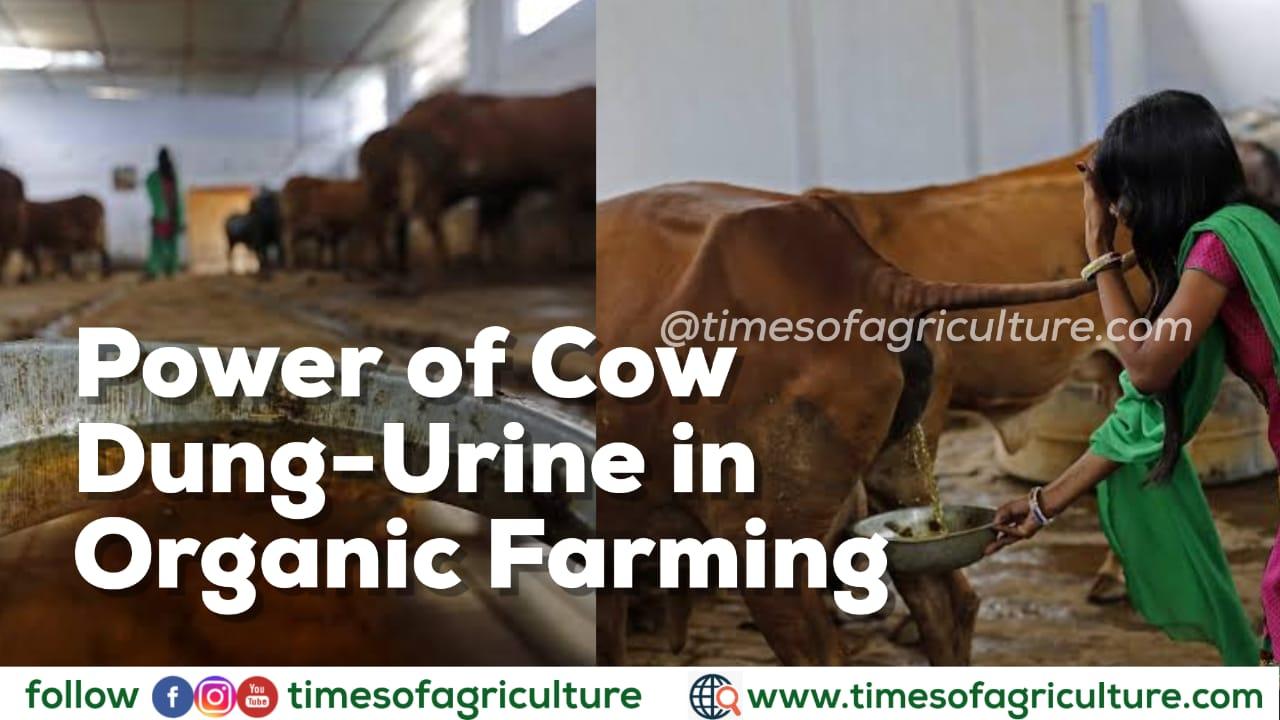 COW DUNG URINE ORGANIC FERTILIZER PESTICIDE