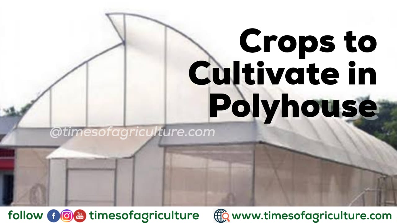 CROPS TO CULTIVATE IN POLYHOUSE