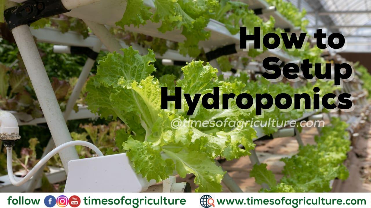 HOW TO SETUP HYDROPONICS AT HOME