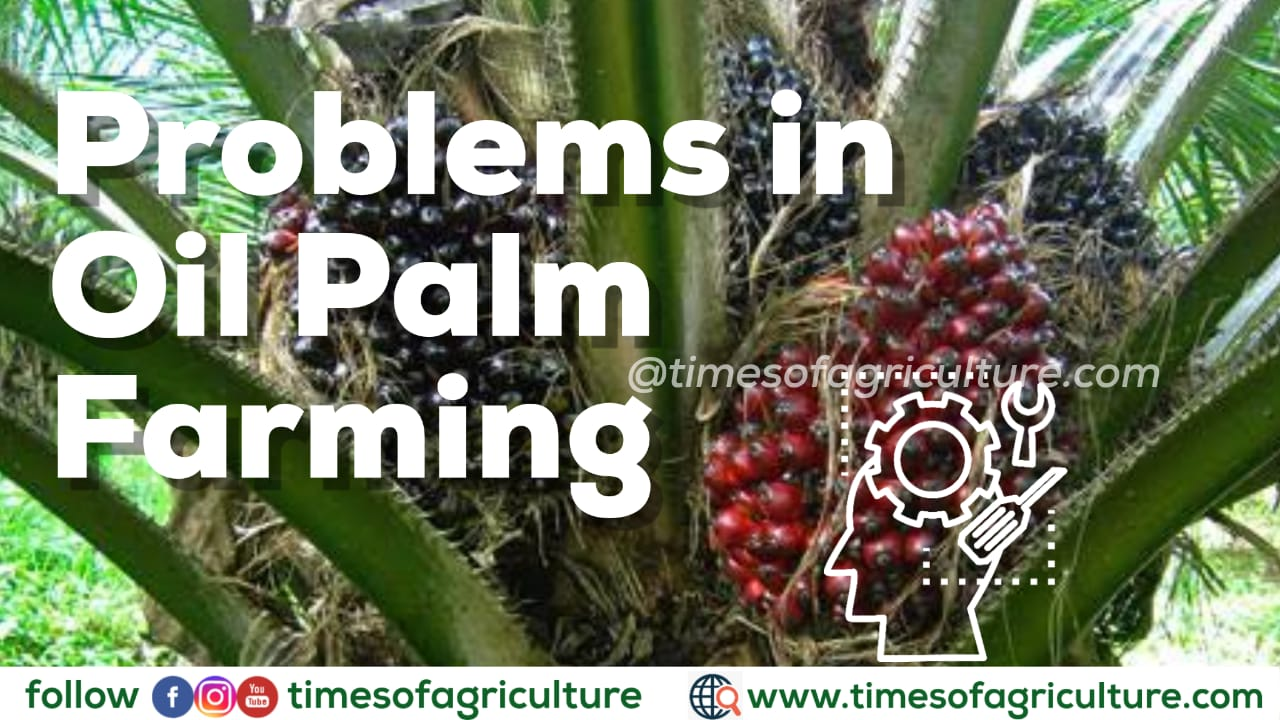 PROBLEMS IN OIL PALM FARMING