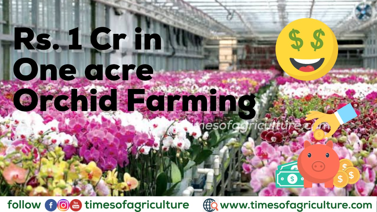 PROFITS IN ORCHID FARMING AGRIBUSINESS