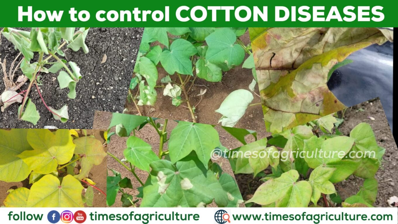 HOW TO CONTROL COTTON DISEASES
